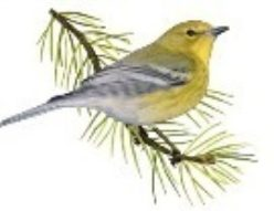 Piney Woods Wildlife Society